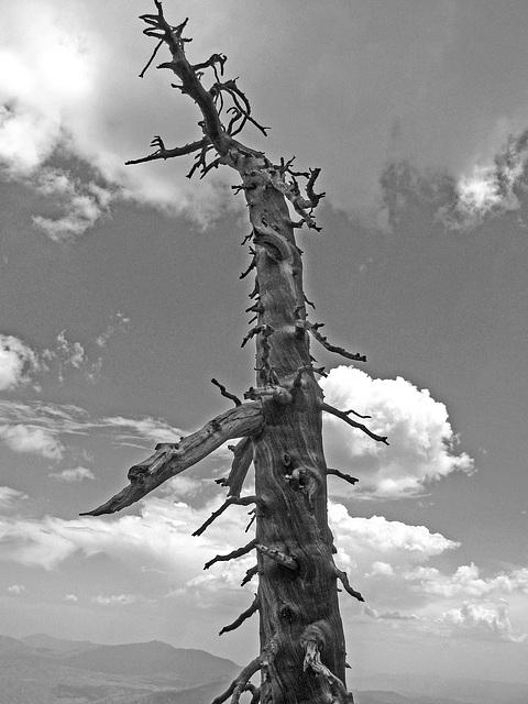 Dead Tree (0468)