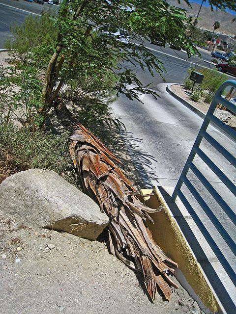 Dead Palm (3362)
