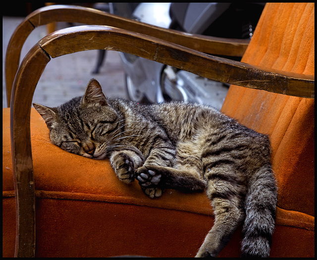 Istanbul cat.......