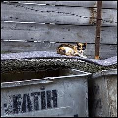 innerspring mattress cat