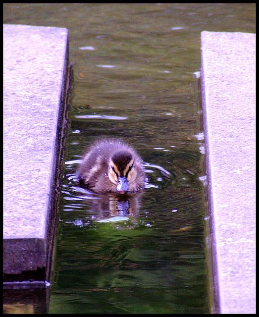Entenkanal / Duckie - sewer