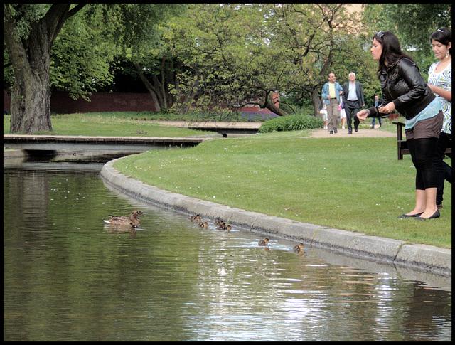 Entenfütterung / Feeding duckies