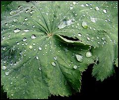 Wassertropfen auf Blatt / Waterdrops and leaves