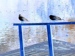Mouettes en pause - Seagulls break / Effet de négatif