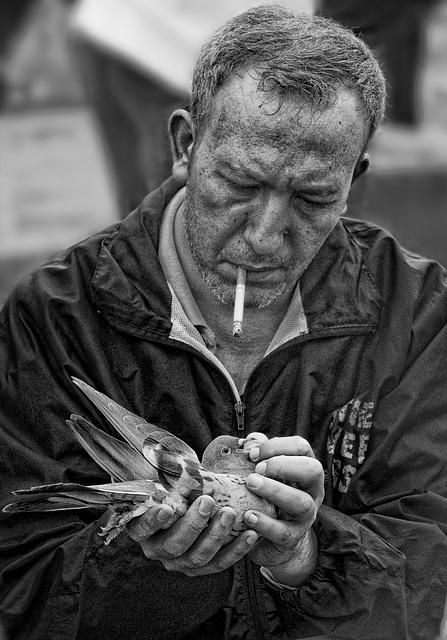 the dove dealer.....