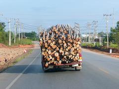 He's a lumberjack and he's errmm...
