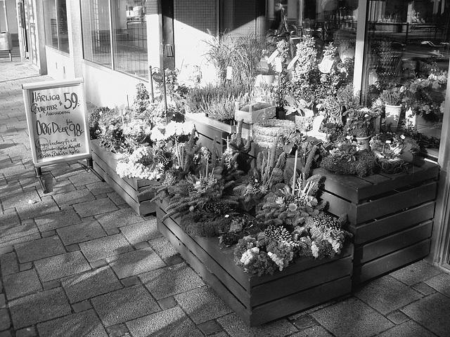 Étalage de plantes et fleurs à la suédoise /  Härliga buketter ortideer flowers sidewalk display -  Ängleholm / Suède- Sweden - 23 0ctobre 2008 - Noir et blanc - B & W