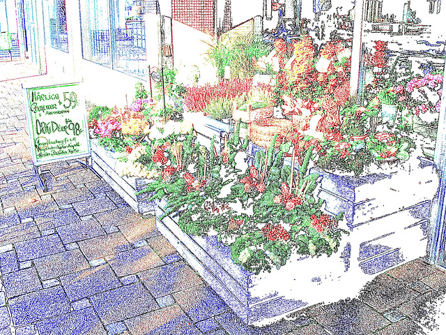 Étalage de plantes et fleurs à la suédoise /  Härliga buketter ortideer flowers sidewalk display -  Ängleholm / Suède- Sweden - 23 0ctobre 2008- Contours de couleurs / Colourful outlines