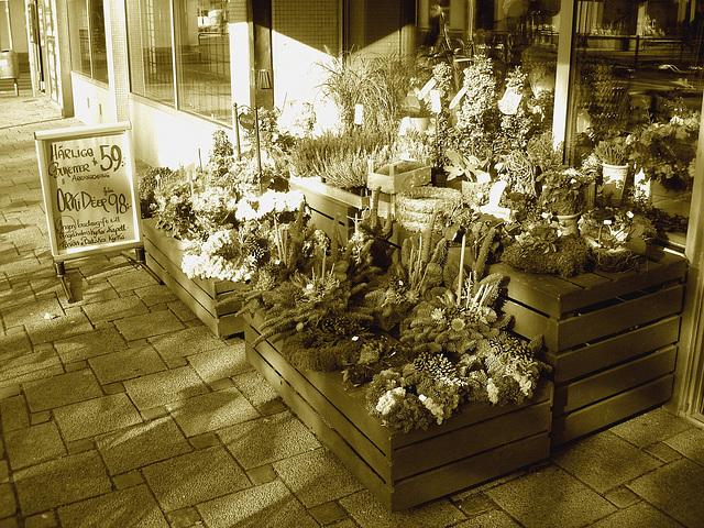 Étalage de plantes et fleurs à la suédoise /  Härliga buketter ortideer flowers sidewalk display -  Ängleholm / Suède- Sweden - 23 0ctobre 2008- Sepia