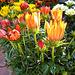 Blumen kultiviert