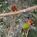 IMG 2003 Papageien 1