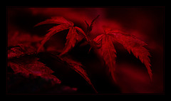 Deep Red Night