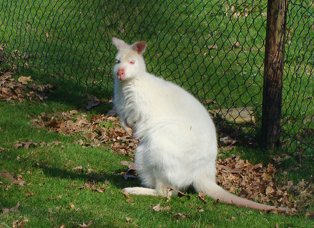 Meet Ratty!