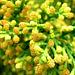 nids de pollen