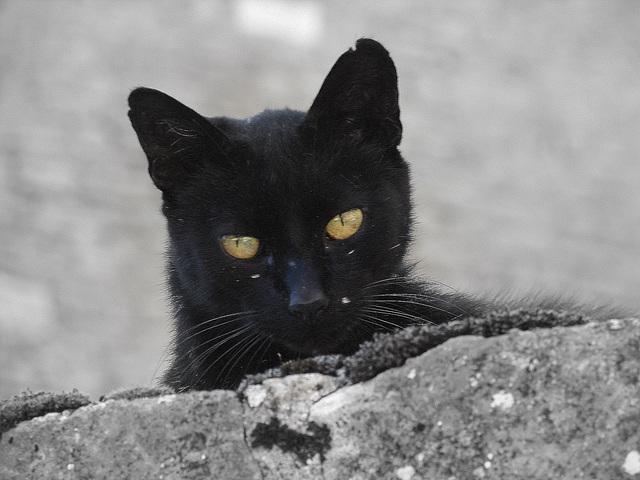 Bourgogne Un des nombreux chats de Châteauneuf