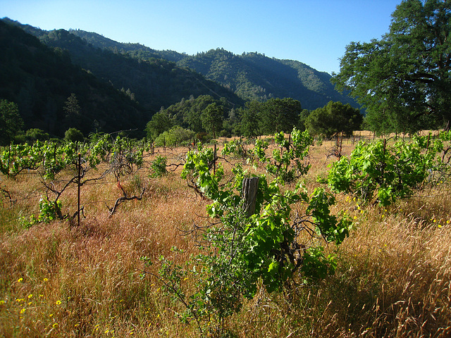 Abandoned Vineyard (2622)
