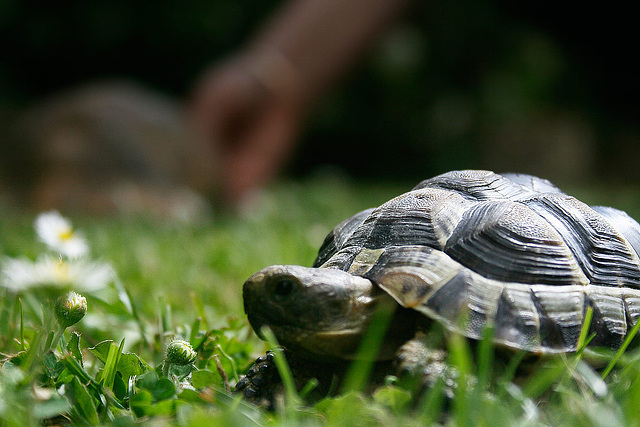 """Turtle compagny """"little"""""""