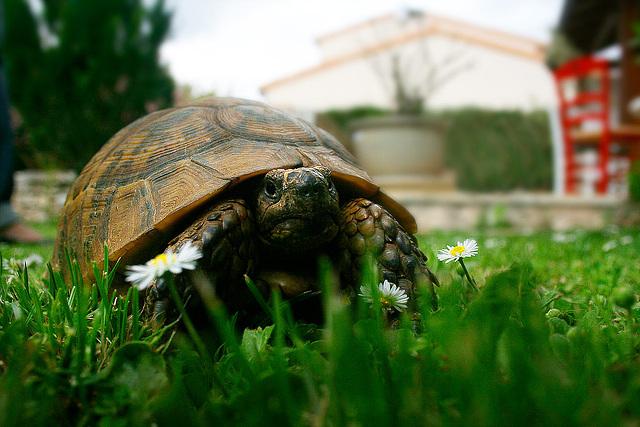 """Turtle compagny """"pâquerette paradise"""""""