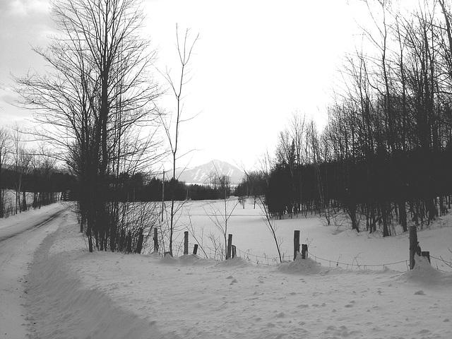 Paysages d'hiver / Winter landscape  - Abbaye de St-Benoit-du-lac  /  7 février 2009. - B & W