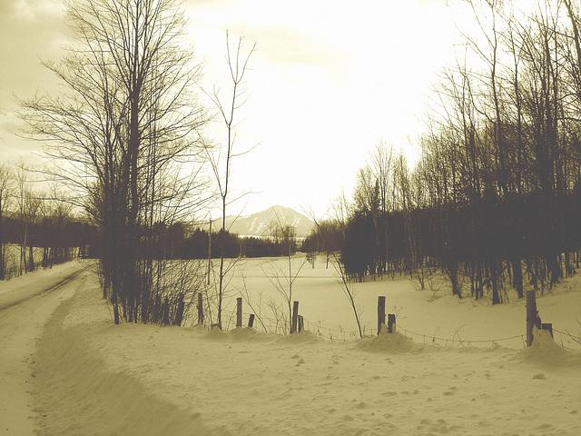 Paysages d'hiver / Winter landscape  - Abbaye de St-Benoit-du-lac  /  7 février 2009.- Sepia