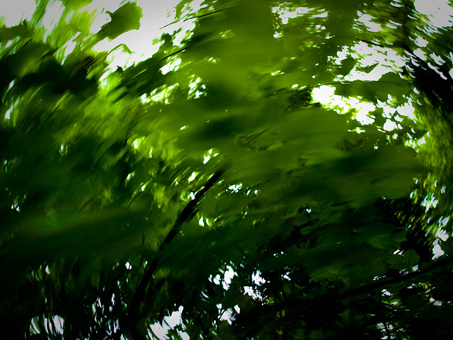 Leaves Running