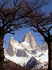Cerro Fitz Roy framed trees, Chili