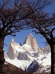 Cerro Fitz Roy framed trees, Chili