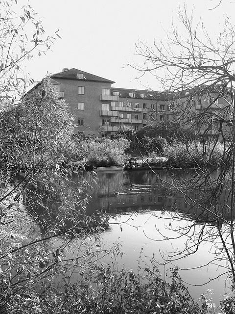 Canards et chaloupe sur la rivière  / Ducks & rowboat by the river  -  Ängelholm / Suède - Sweden.   23 octobre 2008 -  N & B /  B & W