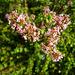 Jade Flowers (2925)