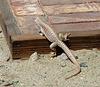 Lizard (4068)