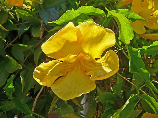 Flower (4041)
