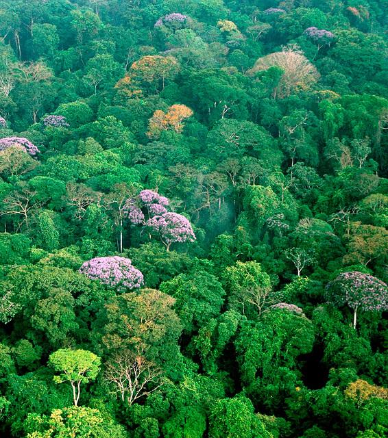 Forêt, Panamá