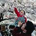 Fête Hanami sous les cerisiers en fleurs, Japon
