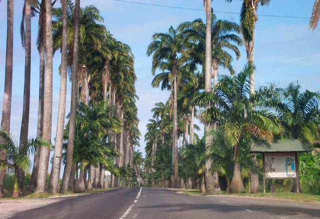 Allée Dumanoir, Capesterre, Guadeloupe