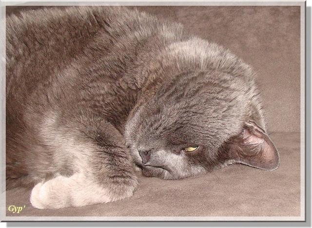 FILOU ne dort que d'un oeil !