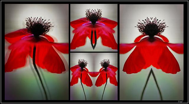 ~♪~Dancing poppy~♪~ (pip)