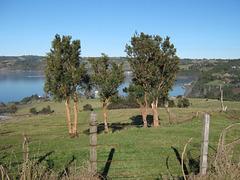 Arrayanes, Chonchi, Isla de Chiloe
