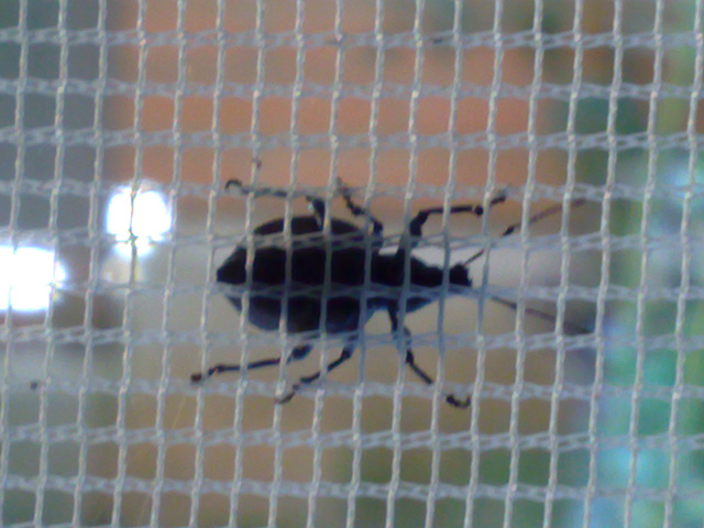 Insecto tras la mosquitera.