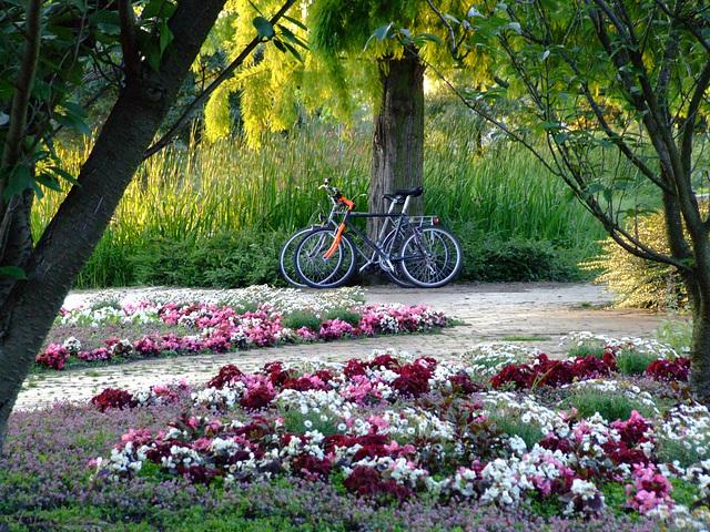 Verliebt im Park