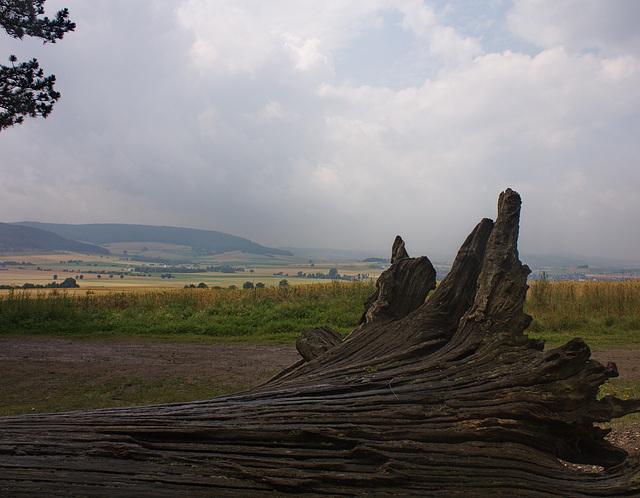 zwischen Ackerrain und Landschaftspark /between field balk and park