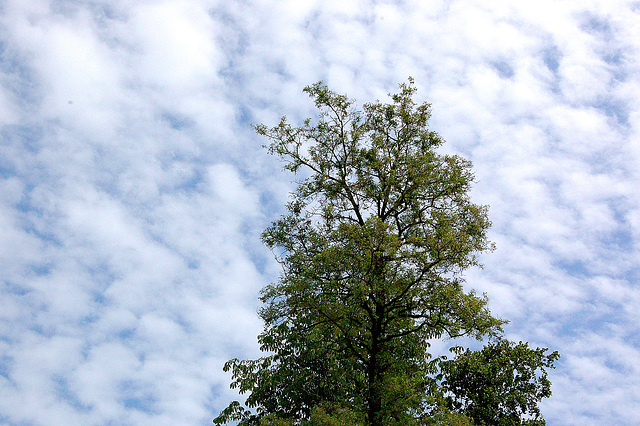 delikata verdo en la ĉielo - delikates Grün im Himmel