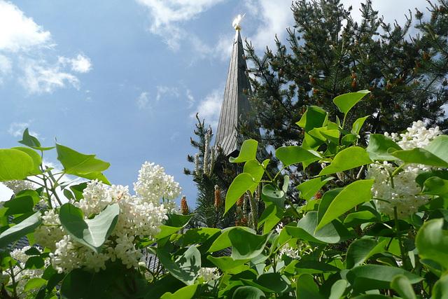 Flieder mit Kirchturm