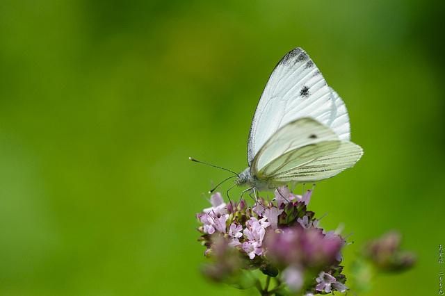 Schmetterlinge // 01