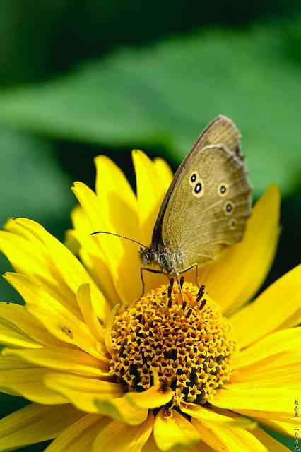 Schmetterlinge // 05