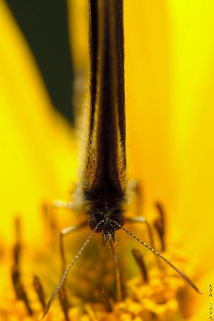 Schmetterlinge // 11