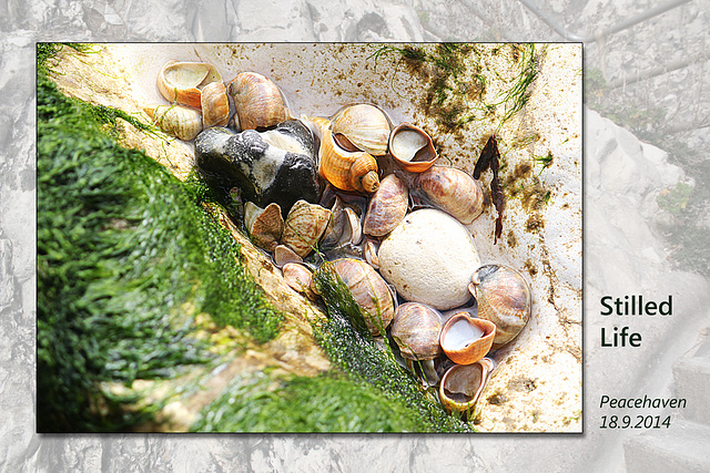 Stilled Life - Peacehaven - 18.9.2014