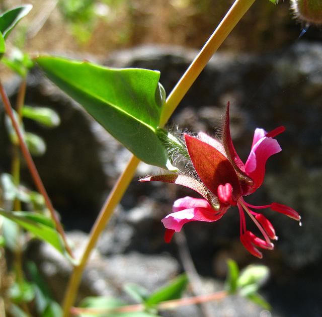 Flower (2675)