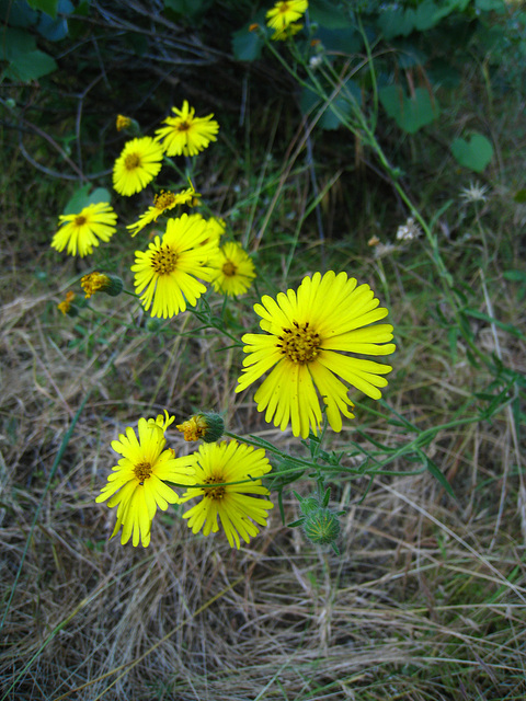 Flowers (2634)
