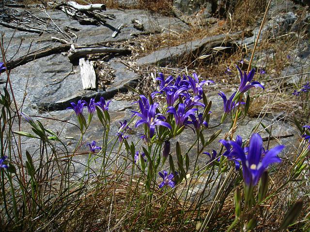 Flowers (2664)