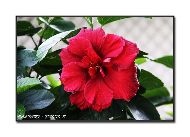 Natures Beautiful Flower,  Enjoy.